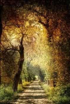 Walk in Spain