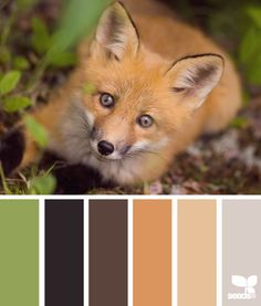 THROUGHOUT THE HOUSE. Fox palette... It's like they know us too well.