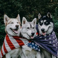 Wonderful All About The Siberian Husky Ideas. Prodigious All About The Siberian Husky Ideas. I Love Dogs, Cute Dogs, Camping 3, Sweet Dogs, Alaskan Husky, Cute Dog Pictures, Dog Photos, Snow Dogs, Husky Puppy