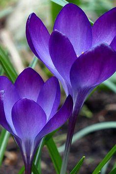 Flores #flowers #purple #violeta