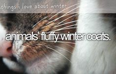 animals' fluffy winter coats. ~ things i love about winter
