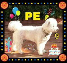 Hoy cumpleaños Pe le deseamos muchos mimos y chuches 💞🎉🎂🎉🍗🥓🎈💕😘😘