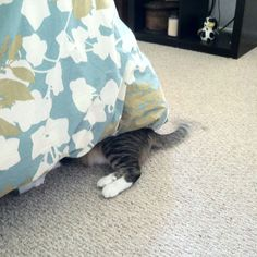 Leo hiding under the bed