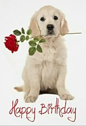 Happy Birthday with puppy and rose Happy Birthday Puppy, Happy Birthday Daughter, Happy Birthday Flower, Happy Birthday Pictures, Birthday Favors, Happy Birthday Wishes Cards, Birthday Blessings, Happy Birthday Quotes, Birthday Posts
