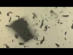 Six Drawing Lessons | William Kentridge Exemplo da técnica utltilizada pelo artista em filmes de animação.