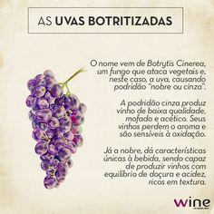 Descubra quais são os famosos vinhos elaborados com uvas botritizadas e o que há por trás dessas variedades. #wine #vinho #uva