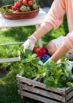 Picking my newly planted baby crate herbs helps them grow denser and soon I'll have to plant them in the big herb garden. Herb Garden, Vegetable Garden, Garden Plants, Country Life, Country Living, Country Farmhouse, Country Roads, Compost, Organic Gardening