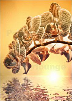 Poster Orchideen Sehnsucht | 02