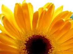 spring flowers - Google Search