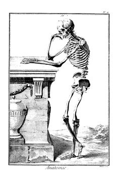 Anatomie Planche III