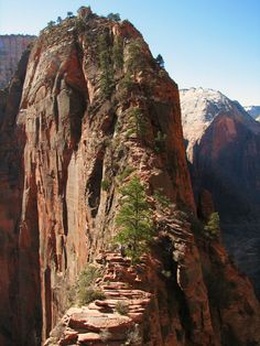 Top of Angel's Landing. Yes I've done it twice. Never again!