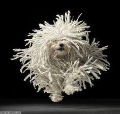 A running mop!