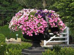 beautiful urn planter