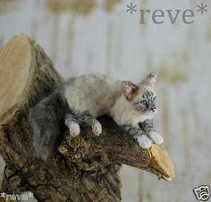 OOAK-Realistic-Handmade-Lynx-point-Birman-cat-Dollhouse-Miniature-1-12-Reve