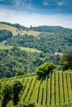Check out View to wine yards / hills by ChristianThür Photography on Creative Market Vineyard, Wine, Creative, Green, Pictures, Photography, Outdoor, Yards, Check