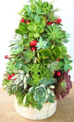 {Succulent Tree Topiary} Want! My succulents always seem to get dry at the bottoms this time of year. Christmas Tree Topiary, Topiary Trees, Christmas Decorations, Holiday Tree, Wedding Decorations, Cacti And Succulents, Planting Succulents, Planting Flowers, Succulent Tree