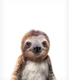 Baby Sloth Print