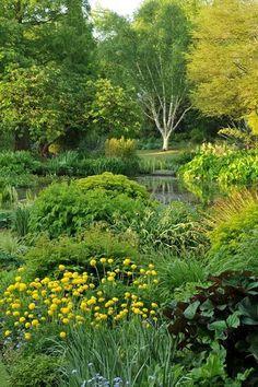 planting around a pond - Google Search