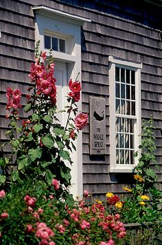 Nantucket Hollyhocks - Kindra Clineff