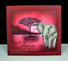 Gina K Designs - Wild About You