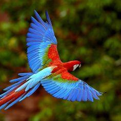 Apple iPad wallpaper - animals - Colorful Parrot iPad Wallpaper