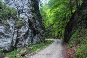 Cheile Brusturet Places To Go, Country Roads, Plants, Cabin, Plant, Planets