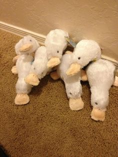 Not ducks!!! They are the fictional webkinz-made character, the googles! Want proof? Where are the wings?