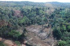 EQUILÍBRIO: Crise ecológica, Papa Francisco
