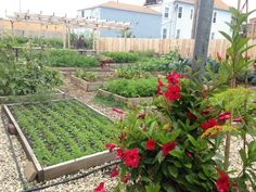 The Best Urban Farming In Chicago