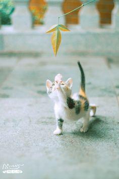 kitty-cat ♥