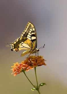 flowers and flutter... #Butterfly #Butterflies #LIFECommunity #Favorites From Pin Board #11
