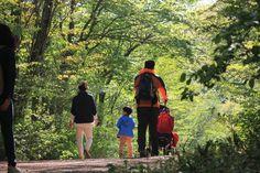사려니숲    혼자 걷기
