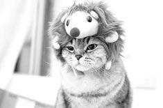 cat in a critter hat