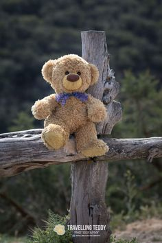 Teddy Bear Gifts, Teddy Toys, My Teddy Bear, Cute Teddy Bears, Bear Toy, Teddy Bear Images, Teddy Bear Pictures, Steiff Teddy Bear, Tatty Teddy
