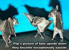 Bats...lol