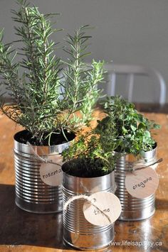Tin Can Herb Garden. fun for window sill! Tin Can Herb Garden. fun for window sill! Container Gardening, Gardening Tips, Organic Gardening, Gardening Vegetables, Gardening Supplies, Garden Table, Garden Fun, Tin Can Garden Ideas, Herb Garden Indoor