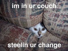 I have a dog that does this  LOL