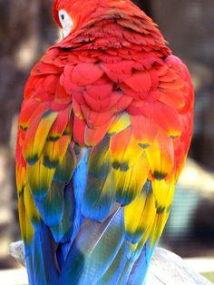 Birds of a feather... #macaw #rainbow #birdinspiration