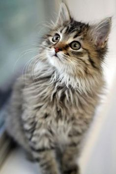 What a beautiful kitten!