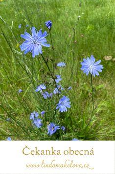 Korn, Garden, Plants, Pictures, Garten, Lawn And Garden, Gardens, Plant, Gardening