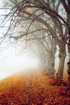 No spring nor summer beauty hath such grace as I have seen in one autumnal face | John Donne