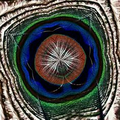 Peacock puddle Digital art K.Aart
