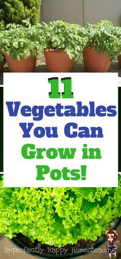 11 Vegetables You Can Grow in Pots. Have a vegetable garden ANYWHERE! And more space to backyard homestead.
