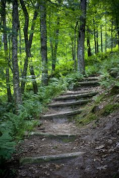 Trail at Wildcat mountain state park, Wisconsin by Tom Tom