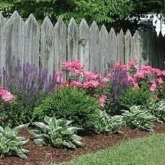 Formal flower bed with salvia, pink roses, boxwood, and hostas in front of picket fence. Follow @gardenapproved by kay