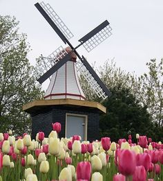 ~Tulip Festival in Holland, Michigan. Michigan Travel, State Of Michigan, Lake Michigan, Oh The Places You'll Go, Places To Travel, Time Pictures, Le Moulin, Great Lakes, Beautiful Places