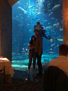 Ossiano, Dubaï - Restaurant Avis, Numéro de Téléphone & Photos - TripAdvisor Dubai Aquarium, Restaurants, Atlantis, Trip Advisor, Palm, Concert, Photos, Pictures, Restaurant