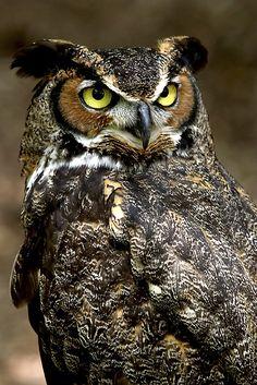 Owls Pictures (44) by al7n6awi, via Flickr