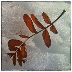 Leaf stem in the snow. Photo A Day Challenge, Nature Photos, Challenges, Snow, Landscape, Painting, Art, Art Background, Painting Art