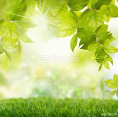 Photo: spring time background